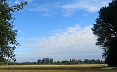 3-IMG_3748 (hemingwayfoto) Tags: acker baum fc feld flickr getreide getreidefeld horizont landschaft landwirtschaft panther sommer wetter wolken