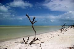 Isla Holbox (dsotg) Tags: holbox quintana roo mexico quintanaroo isla island holboxisland islaholbox caribbean caribe sea beach