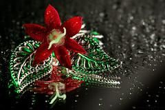 Hybrid reflections (Beatriz-c) Tags: flower macro silver leaf drops reflections macromondays inthemirror