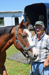 2016-08-28 (8) Miss Nicole arrives at 'horse show' (JLeeFleenor) Tags: photos photography md maryland horseshow gambrills horses thoroughbreds equine equestrian cheval cavalo cavallo cavall caballo pferd paard perd hevonen hest hestur cal kon konj beygir capall ceffyl cuddy yarraman faras alogo soos kuda uma pfeerd koin    hst     ko  trainers equinedentaltechnician