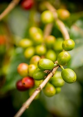 0005.jpg (1K-Words by David Michael) Tags: nikon2470mm fx jamaica nikon coffeetraders coffee bluemountain