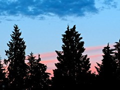 The Blue Hour . (ikan1711) Tags: bluehour blue bluesky blueskies blueclouds pink pinkclouds sunset sunsets sunsetskies sunsetclouds sunsetoutlines trees treesilhouettes treesinsunsetskies