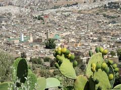 Prickly view on Fez (Shahrazad26) Tags: fs fez fselbali medina marokko morocco maroc cactus karaouiyine moulayidriss