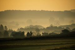 Misty morning (Radek Fluder) Tags: mist trees polska forest birds morning layers poland
