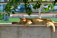 The Cat (sky_view7) Tags: mew cat sun sleep relax