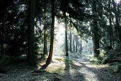 "Herfst (""Daniel"") Tags: autumn fog woods sun sunrise mist foveon sigma dp2x veluwe nature fall"