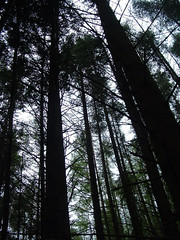 glenbrittle on on august morning (floots) Tags: poem poetry nature wildlife outdoor skye scotland glenbrittle trees pine forest landscape conifer