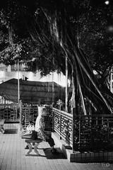 Meditation under a Tree (Taomeister) Tags: nikkor5012ais hongkong templestreet yaumatei fujifilmneopan400 nikonfm3a
