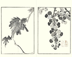 Grape (Japanese Flower and Bird Art) Tags: flower grape vitis vinifera vitaceae buncho tani nanga woodblock picture book japan japanese art readercollection