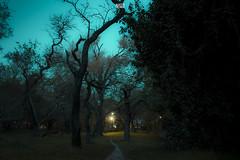 Sueo (Agudevani) Tags: arboles trees tree sueo dream bell ville cordoba nature naturaleza canon 600d t3i park parque