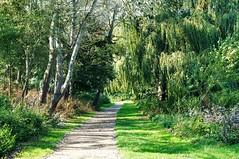Tropical Aylesbury (dlanor smada) Tags: paths aylesbury bucks