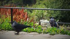 I'm watching you (danakhoudari) Tags: bird handlewithcare macromondays nature green flowers park canon canon7d canon50mm love