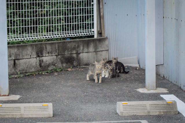 Today's Cat@2012-08-11
