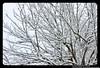 Whistler - Canada - Vancouver , Whistler 2012 Winter - 40 (Lucas Mendes BH) Tags: camera snow ski color beautiful canon de effects grande photo amazing cool nice flickr xx awesome large x lucas size fotos snowboard gran xxx fotografia bela mendes hermosa efeitos cor rare fresco legais legal rara xxxx bh câmera raras belas impresionante tamanho efectos googlecom incríveis tamaño incrível wwwflickrcom xxxxxxxx 60d canon60d lucasmendes lucasmendesbh rarocámara whistlercanadavancouver whistler2012winter