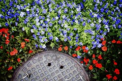 City Meets Country (lynn.h.armstrong) Tags: camera old city flowers red summer brown ontario canada green art leaves port lens geotagged photography photo interesting mac aperture nikon long flickr purple zoom montreal south country images lynn h cover getty manhole nikkor armstrong stormont vr licence afs vieux request dx sault attribution ingleside ifed 18200mm f3556 noderivs vrii d7000 lynnharmstrong