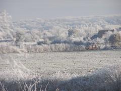 Severe frost looking east from Wilstead. (Lee Mullins) Tags: trees bedford frost winter2010 wilstead