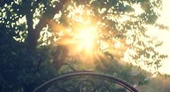 autumn sun (TurisZ) Tags: sunset sun tree nice warm sony toycamera graded alpha a230 vintageeffect turisz analocolor