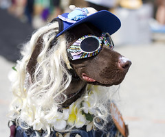 One hip dog (San Diego Shooter) Tags: portrait dog dogs sandiego delmar halloweencostumes dogincostume dogsinhalloweencostume doghalloweencostumeideas surfdogsurfathon2012 surfdogsurfathondelmar nathansurfdogsurfathon2012