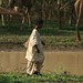 Cuidando dos camelos