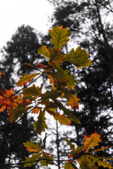 Autumn (AlanScerbakov) Tags: autumn color colors nikon months 1855mm d3100 alanscerbakov