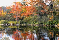 Fall reflections along Coastal Route 1, Maine (PhotosToArtByMike) Tags: autumn trees fall me reflections landscape maine scenic route1 landscapephotograph