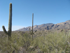 Santa Catalina Mountains (ToddStapleton) Tags: arizona southwest catalina desert tucson catalinamountains sabinocanyon santacatalinamountains santacatalina blackettsridge blackettsridgetrail toddstapleton sabinocanyonnationalrecreationarea