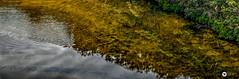 paddle (The Photo Smithy) Tags: mtkuringgai berowravalleynationalpark berowracreek paddle