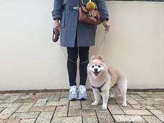 Sunday Selfie  with My Dog | My Dog Is Cooler Than Your Kid. (eeemmmiii) Tags: sunday selfie mydog mydogiscoolerthanyourkid