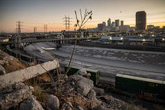 Last Tree on Earth (fhoerr) Tags: losangeles california us atdusk sunset sky boyleheights bridges bnsf bridge concrete chainlink dtla downtownla d610 downtownlosangeles eastla fhoerr fhoerrx freeway foxtail fence grass grafitti gravel growth nightshot hollywoodfwy industrial rivercrossing nikond610 laskyline losangelesriver outdoors railroad river rail riversystem rails streetlights twilight tracks trains unionpacific outdoorlife urban weeds
