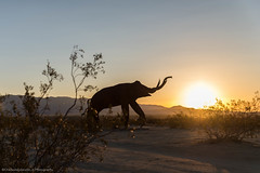 An Elephant in the Desert (charlestheneedler) Tags: aaron borregosprings cc charles chuey earvin josie julian kqranch logan metalsculpture moonrise sunset vanessa