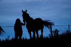 Marie och Ladylike (Peter'sFoto) Tags: hst horse siluette