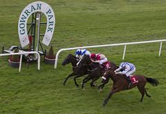 Gowran Park wednesday evening (Horse Racing Ireland) Tags: jessamine liberality gowranpark ireland irl