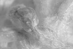 L'amour est pur - Love is pure (p.franche malade - sick) Tags: skancheli monochrome noiretblanc blackandwhite zwart wit blanco negro schwarzweis μαύροκαιάσπρο inbiancoenero 白黒 黑白чернобелоеизображение svartochvitt أبيضوأسود mustavalkoinen שוואַרץאוןווייַס bestofbw sony sonyalpha100 objectifminolta minoltalens minolta beercan vintage hdr dxo flickrelite bruxelles brussel brussels belgium belgique belgïe europe pfranche pascalfranche schaerbeek schaarbeek pure pur nonochrome monochromy fibre macto bokeh superbokek mocio