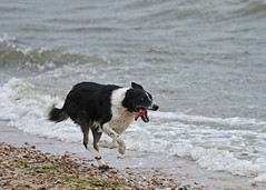 Aug20171a (Mike Millard) Tags: hamworthypark pooleharbour windsurfers