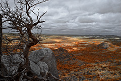 Tree and View from Mount Scott IR in the Wichita Mountains NWR, OK - 20150614CRN (Christopher Neel Photography) Tags: dead tree colorful foliage color infrared photo wichita mountains national wildlife refuge oklahoma lawton medicine park granite cloudy nature hiking adventure outdoors outdoor tourism tourist orange christopher neel photography fine art otherworldly serene