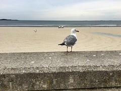 Revere Beach - Seagulls Perch. (Polterguy30) Tags: seagulls seagull reverebeach massachusetts revere