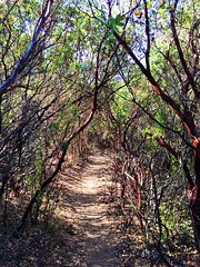 A trail at Annadel State Park in Sonoma County, California. (harminder dhesi photography) Tags: santarosa bayarea norcal california sonomacounty sonoma enjoyingtheview enjoying view nature trees park trail summer outdoors hiking landscape