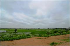 Rice field [HDR] (....Nishant Shah....) Tags: india nature landscape nikon tokina hyderabad hdr worldphotographyday nikond90 tokina1116mm