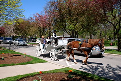 Una deliziosa tappa lungo il Niagara (RobbiSaet) Tags: horse lake ontario canada america lago nikon niagara carrozza cavallo niagaraonthelake calesse d80 robbisaet robertasaettone