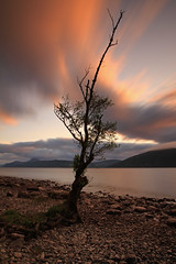 The Wee Pointy Tree. (Gordie Broon.) Tags: longexposure sunset summer nature water clouds landscape geotagged photography evening scotland scenery alba shoreline scenic escocia hills lochness inverness lonetree schottland ecosse invernessshire scottishhighlands dores meallfuarmhonaidh inverfarigaig northernscotland canoneos7d bestcapturesaoi gordiebroon weepointytree lowloch