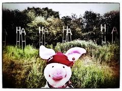 Dockville 2012 /// Dusica Drazic: Industrial Arboretum