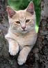 How could you not love this face?! (sminky_pinky100 (In and Out)) Tags: pet cute animal loving cat kitten mine little sweet shakespeare omot