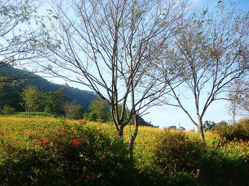 玉里赤柯山 (85).jpg