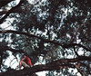 Wonders (HemberSquare.) Tags: sunset plants tree adam canon prime alone year relaxing 85mm calm 365