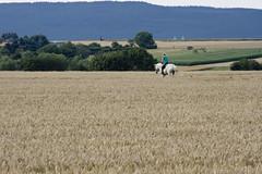 Reiterin, Weikirchen 2012 (Spiegelneuronen) Tags: felder taunus frankfurtammain reiten steinbach weiskirchen