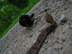 Drift Action (Coyote Peterson) Tags: copperhead zaleskistateforest driftinnovation