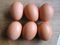6 Riverview Eggs Ltd - Medium Eggs - Eggs (Lord Inquisitor) Tags: brown chicken box caged eggs carton medium hen ltd riverview