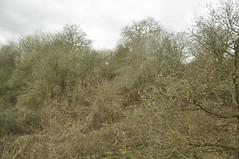 Churnet Valley Railway (82) (rs1979) Tags: staffordshire cvr churnetvalleyrailway churnetvalley cauldonlowe cauldonlowebranch
