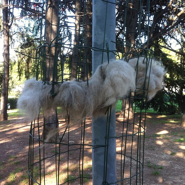 Peli di cani appesi attorno ai pali.