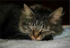 My sweet Lucy  (Viola & Cats =^..^=) Tags: cats pets animals felini felines gatti animali catnipaddicts bestcapturesaoi elitegalleryaoi mygearandme mygearandmepremium mygearandmebronze mygearandmesilver mygearandmegold